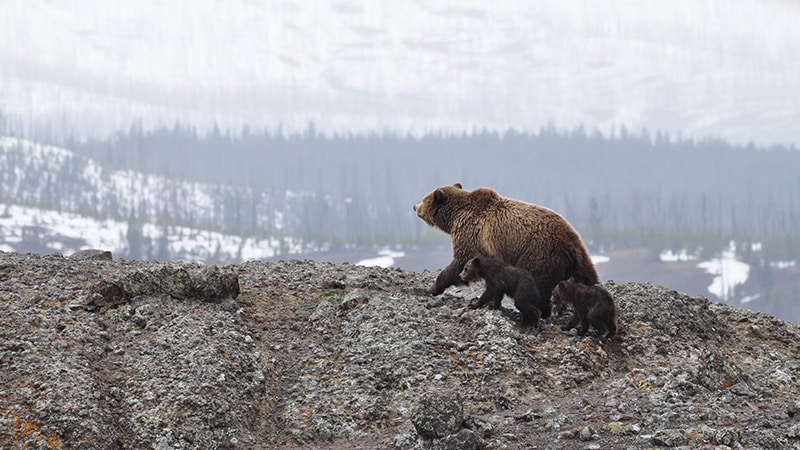 02 Wildlife-men-canada-Kanada-bär-bear-with-children-on-mountain